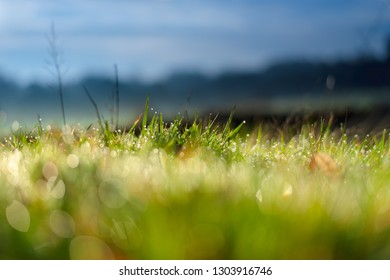 Grass detail with morning dew droplets