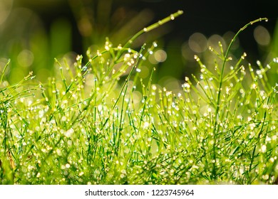 grass with dew drops Nature Background