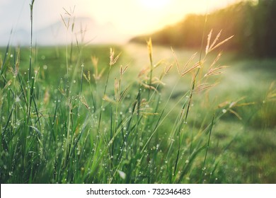 Grass and dew in the morning after rain. Bright morning. Encouragement concept