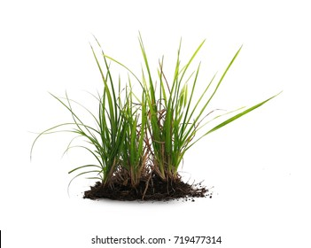 Grass with dirt, isolated on white background