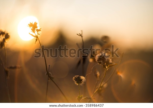 Grass with evening light