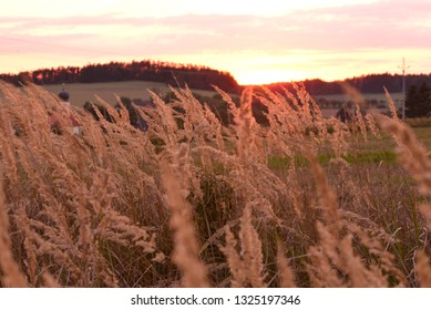 Grass in evening time.
