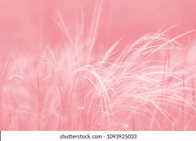 grass feathe. toned background.