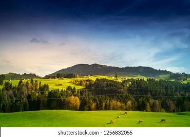 Grass field against sky
