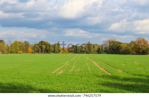 Grass field with autumn trees and cloud sky. Czech landscape