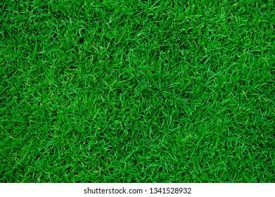 grass field background, green grass, green background