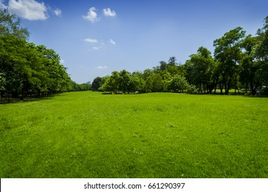 grass field in the beautiful landscape
