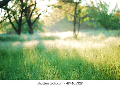 Grass field with blur trees
