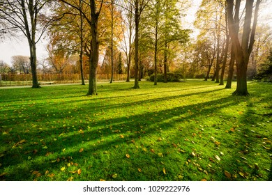 grass field in forest with sunlight in Potsdam Germany