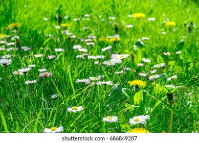 Grass field full of herbs and wild flowers