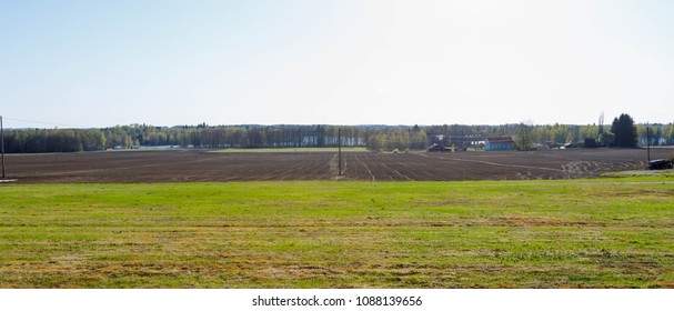 Grass field and graveled road under blue sky, Spring in Finland, cranes gather in a flock. A flock of cranes on the field