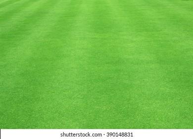 Grass field / Green grass background