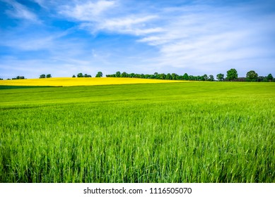 Grass field, green farm fields and sky, scenic landscape