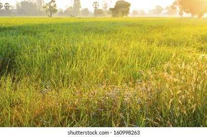 Grass field landscape at sunrise