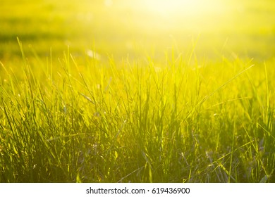Grass field landscape at sunrise. Nature background.