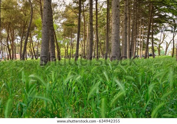 Grass field near the beach