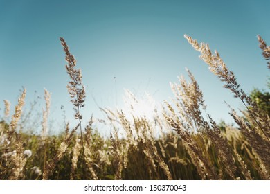 Grass in a field on a sunny day.