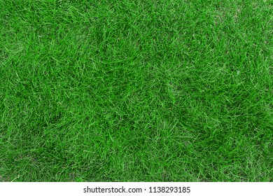 grass field photo texture top view