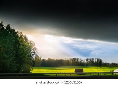 Grass field with sunlight
