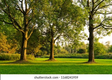 grass field with three trees in the sun. national park Biesbosch, Merwelanden, The Netherlands