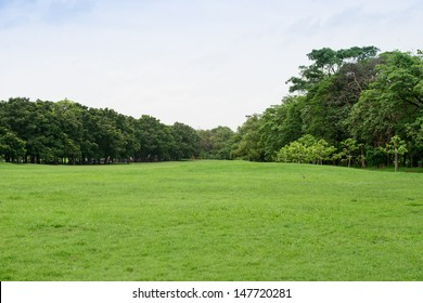 The grass field and the tree