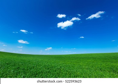 grass field under blue sky