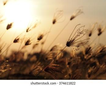 grass field/nature grass field with sunset background.