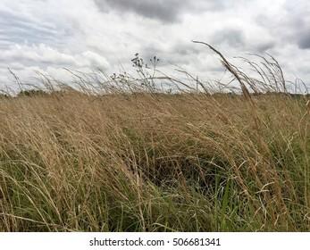 Grass fields in Georgia