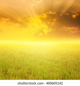 Grass fields and sunset for background
