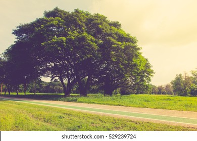 Grass fields and tree with sky vintage color