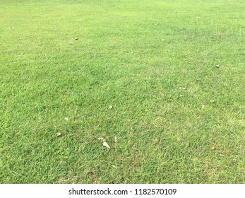 Grass filed floor texture for background