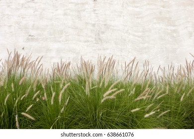 Grass flower with cement wall background