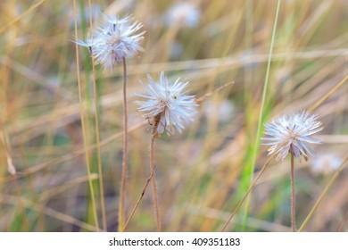 Grass flower field.