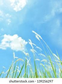 Grass flower field on blue sky.