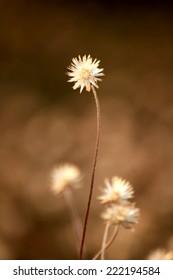 Grass flower field on sunlight