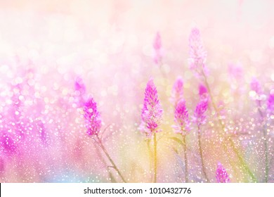 grass flower field in spring background with sunlight soft romance in colorful pastel tone