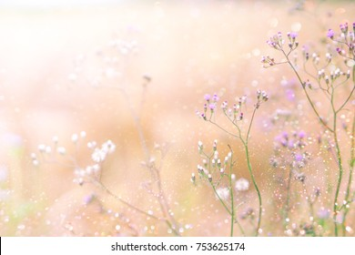 grass flower field in spring background with sunlight soft pink tone