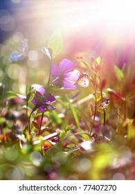 grass and flower field under the morning sunlight