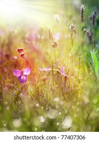 grass and flower field under the morning sunlight