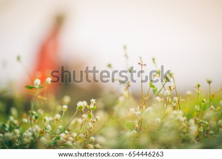 Grass Flower Foreground And Blur Cute Girl On Background Image For Backgroundwallpaper