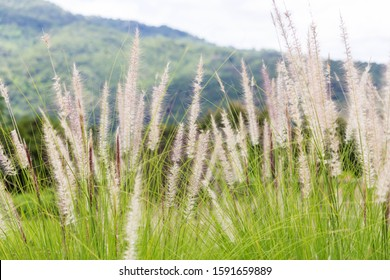 grass flower  with the mountain for background
