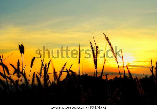 grass flower with mountain and  beautiful sky gradient from the sunlight on silhouette colour