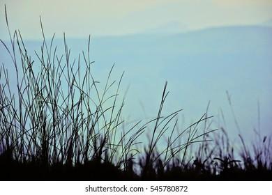 grass flower on the mountain