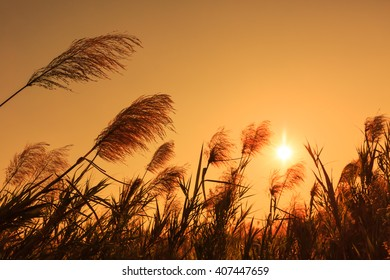 grass flower in the rays of the sunset