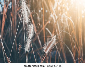 grass flower with the sun light in vitage tone