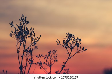 grass flower at sunset background