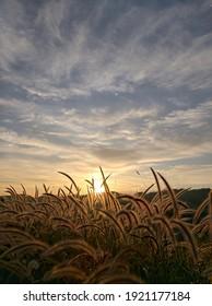 Grass flower in sunset mood