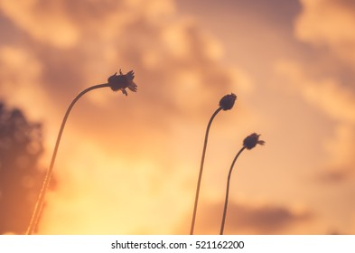 Grass flower in sunset and sun light abstract background. Nature and environment concept. Shallow depth of field. Vintage tone filter color style.
