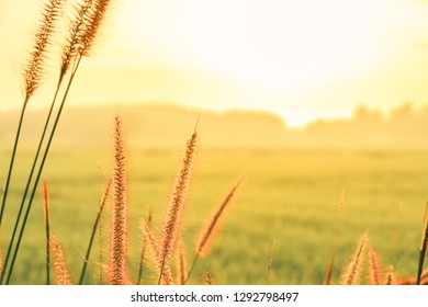 Grass flower with sunshine in the moaning ,well use as background