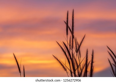 Grass flower with twilight